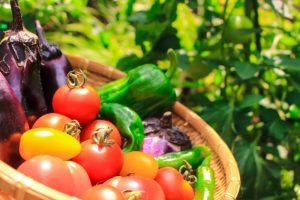 summer heatstroke vegetables